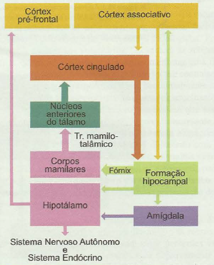 sistema límbico papez psicologia emoções