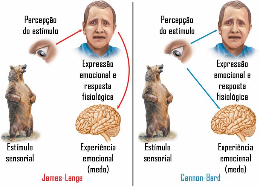 James-Lange Cannon-Bard Psicologia das emoções